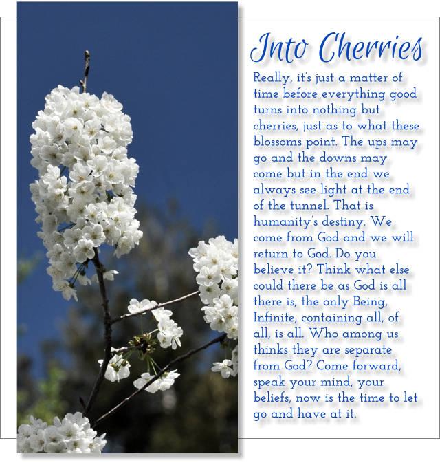 Into Cherries 2