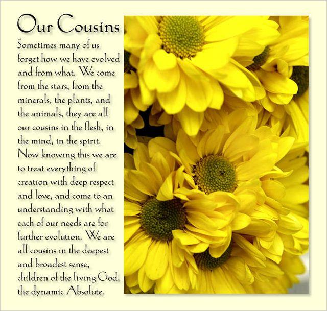 Our Cousins 2