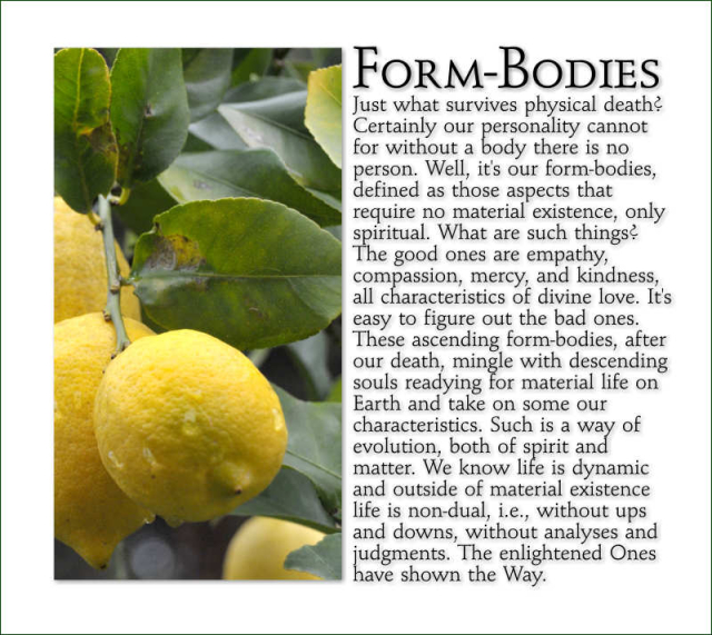 Form-Bodies 7 2