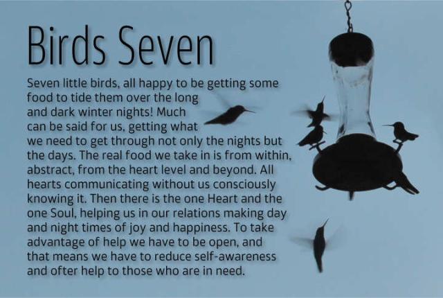 Birds Seven 2
