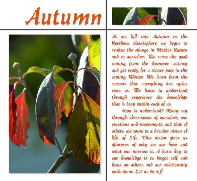 Autumn 11 2
