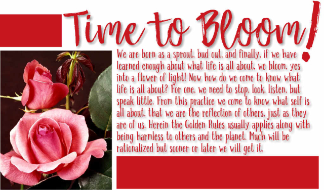 Time to Bloom!