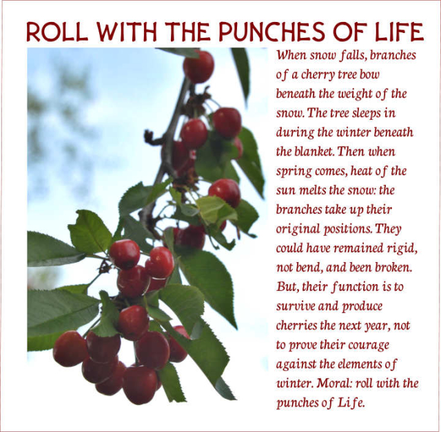 Roll With The Punches Of Life 2
