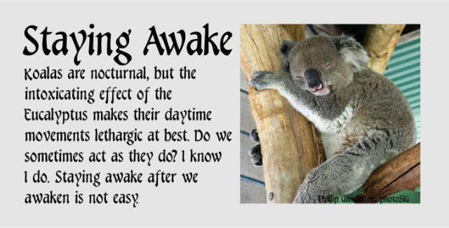 Staying Awake 2