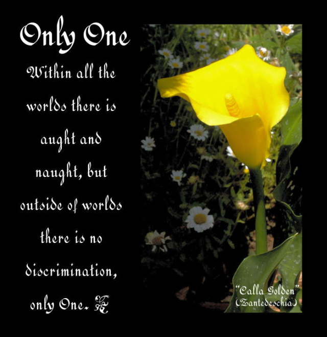 Only One 2