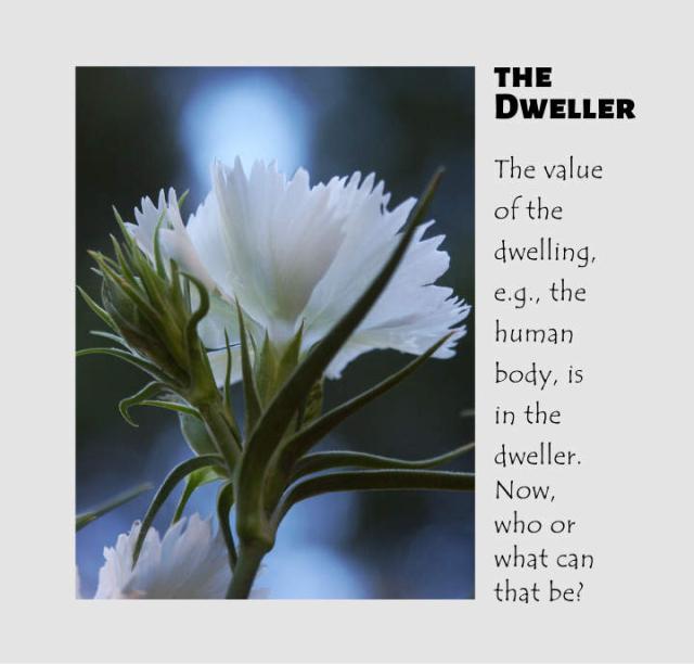 The Dweller 2