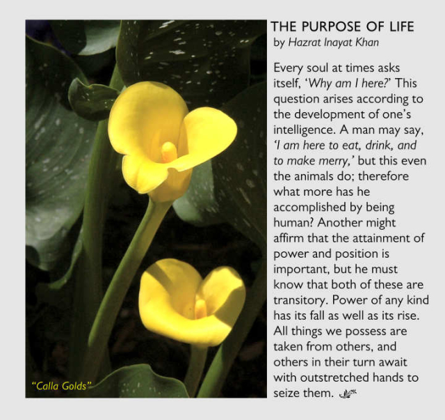 The Purpose Of Life 2